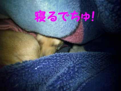 寝るでちゅ!