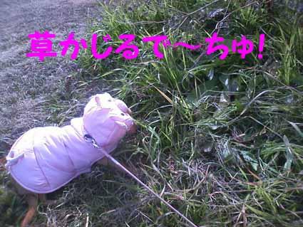 草かじるで~ちゅ!