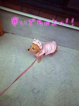 寒いでちゅよっ!!