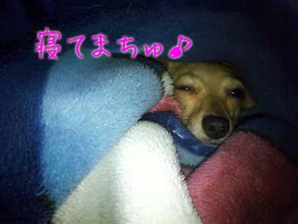 寝てまちゅ♪