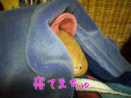 寝てまちゅ