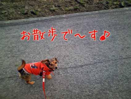 お散歩で~す♪
