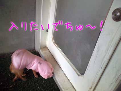 入りたいでちゅ~!