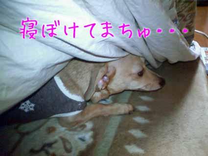 寝ぼけてまちゅ・・・