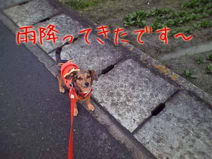 雨降ってきたです~