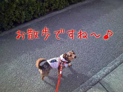 お散歩ですね~♪