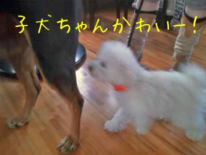 子犬ちゃん