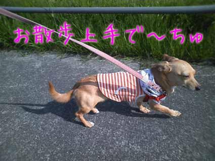 お散歩上手~
