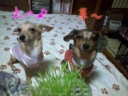 草食べます?