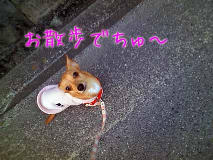 お散歩でちゅ~