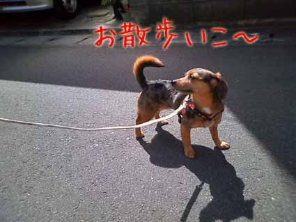 お散歩いこ~