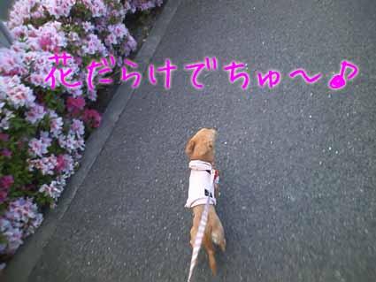 花だらけでちゅ~♪