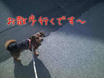 お散歩行くです~