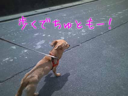 歩くでちゅともー!