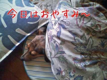 今日はおやすみ~