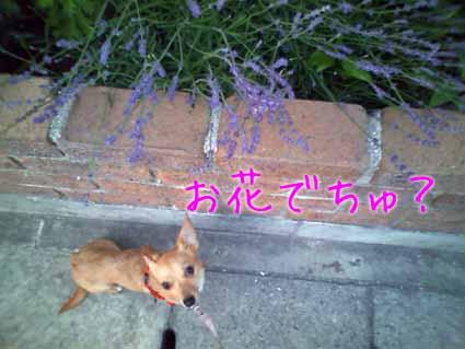 お花でちゅ?