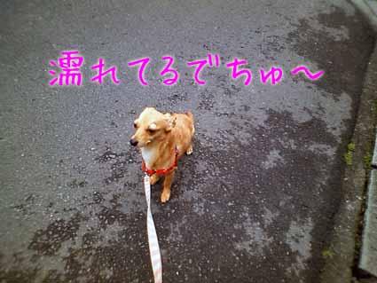 濡れてるでちゅ~