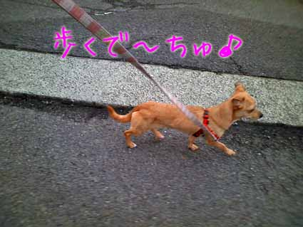 歩くで~ちゅ♪