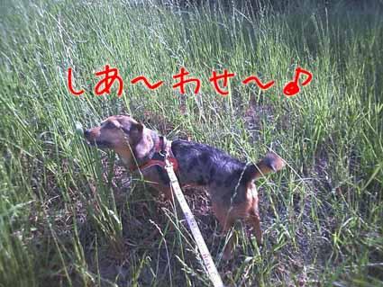 しあ~わせ~♪