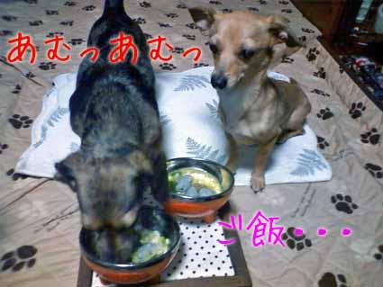 ご飯・・・