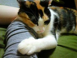 これは良い枕です