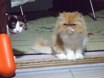 ちーちゃんとレオン君