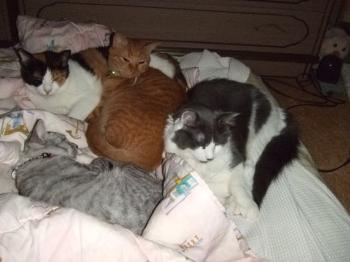 2008・9・23猫団子