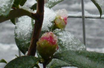 2012.2.29雪