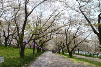 2012.4.17 権現堂