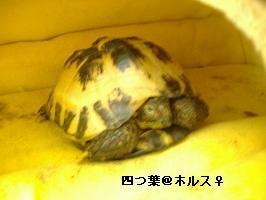 v-DSCF3139_20081105113434.jpg