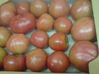 tomato2_conv21.jpg