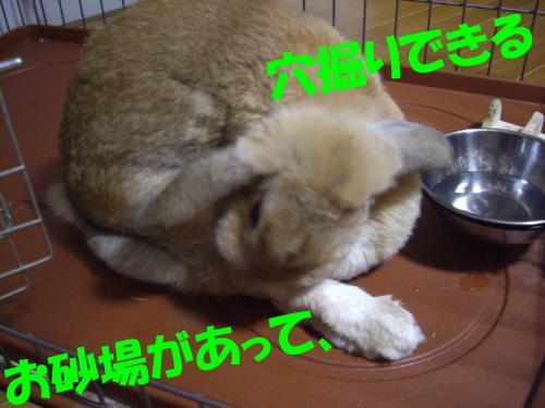IMGP0186_convert_20080811214047.jpg