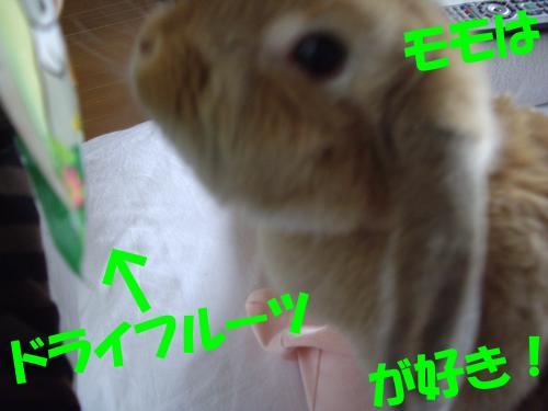 IMGP0226_convert_20080813221207.jpg