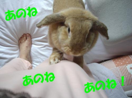 anone_convert_20080530232747.jpg