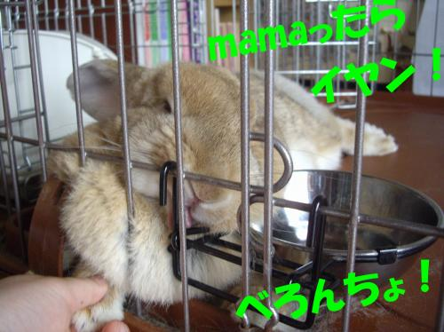 bero_convert_20080617113602.jpg