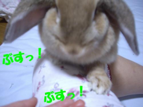 busu1_convert_20080702111220.jpg