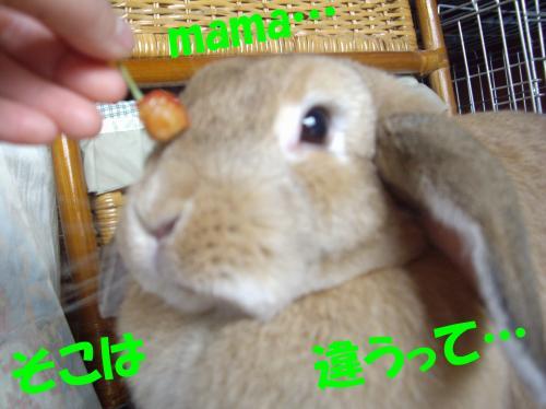 chigau_convert_20080703200128.jpg