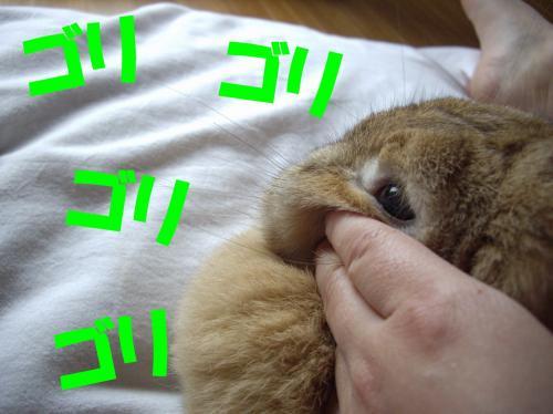 gori_convert_20080628223605.jpg