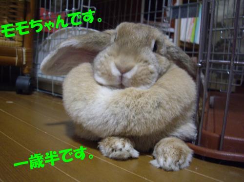 hajimemashite_convert_20080527192323.jpg