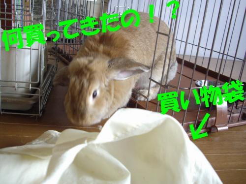 hukuro_convert_20080602001742.jpg