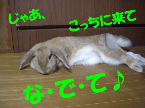 jaa_convert_20080627210406.jpg