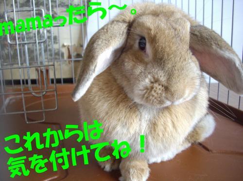 kiwo_convert_20080622233107.jpg