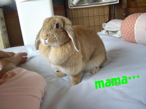 mama_convert_20080702111013.jpg