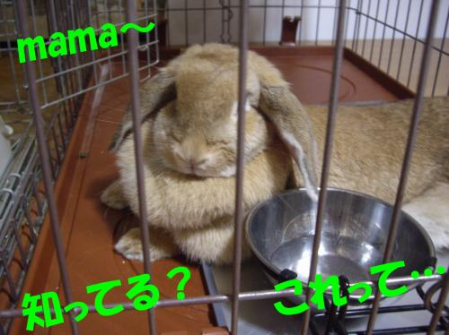 mama_convert_20080706210808.jpg