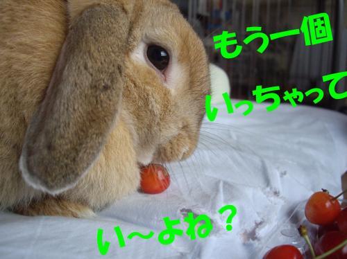 mouikko_convert_20080703195220.jpg