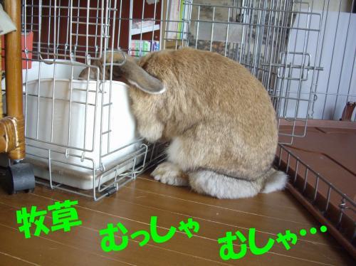 mussha_convert_20080604011821.jpg
