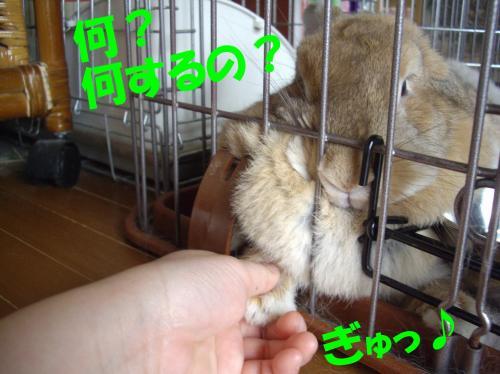 nani_convert_20080617113121.jpg