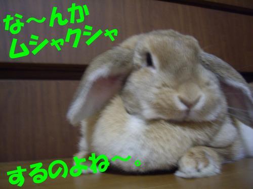 nannka_convert_20080622230827.jpg