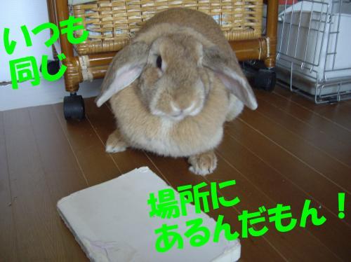 onaji_convert_20080702204511.jpg