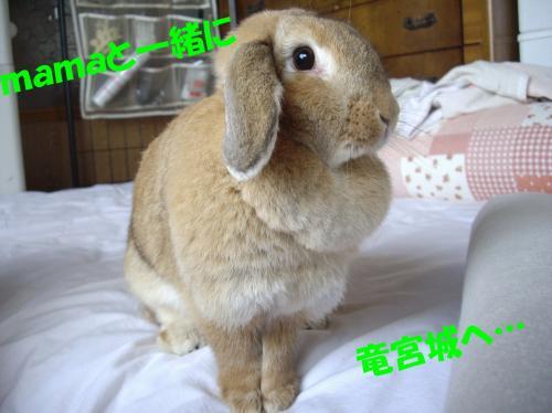 ryuuguu_convert_20080528095956.jpg